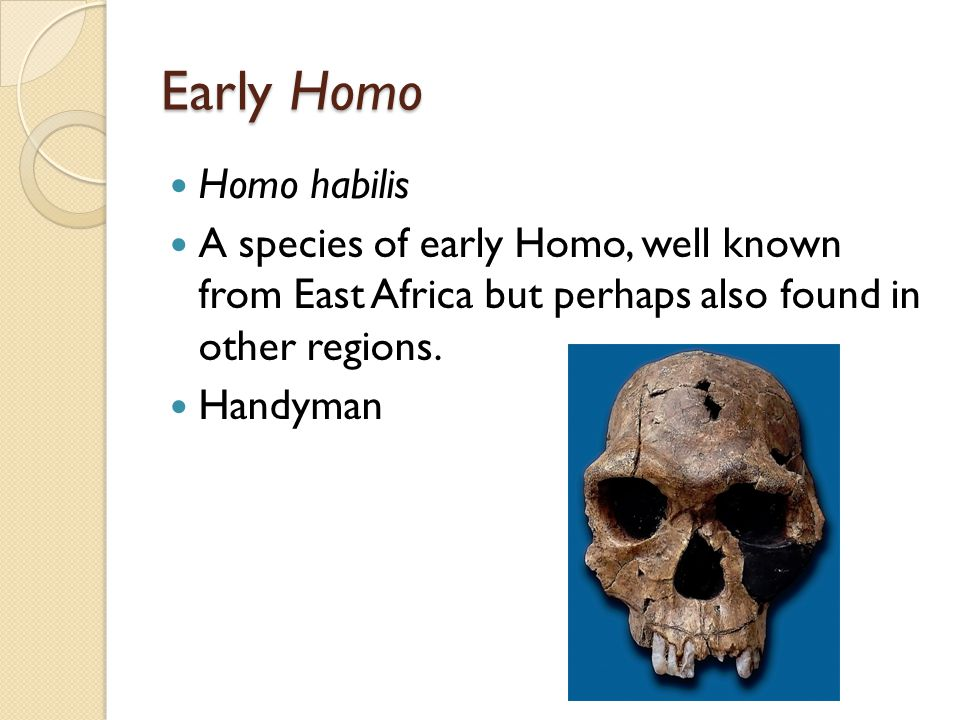 Early Homo Homo habilis A species of early Homo, well known from East Africa but perhaps also found in other regions.