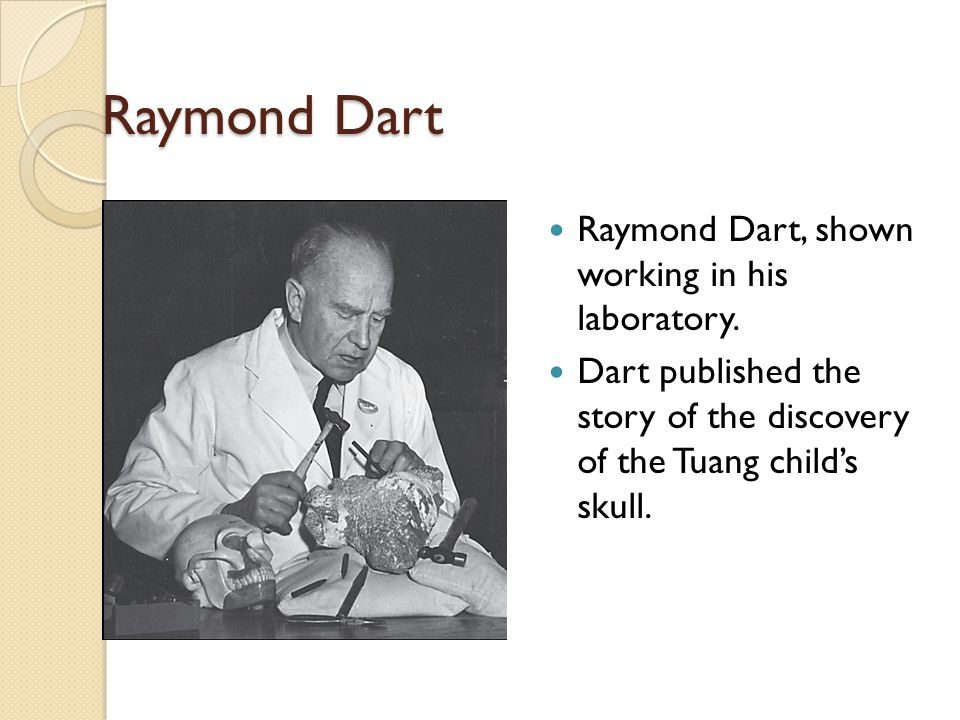 Raymond Dart Raymond Dart, shown working in his laboratory.