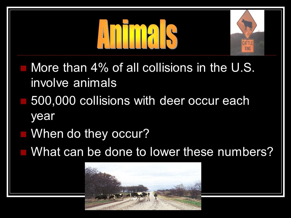 More than 4% of all collisions in the U.S. involve animals 500,000 collisions with deer occur each year When do they occur? What can be done to lower