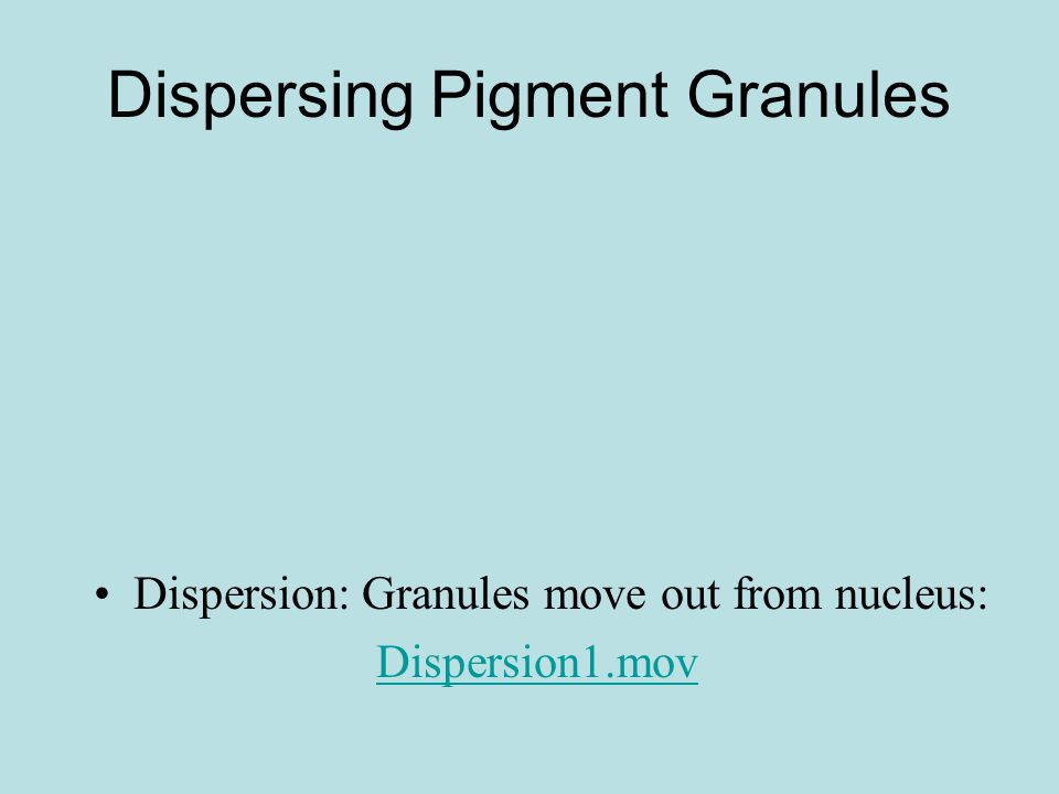 Dispersing Pigment Granules Dispersion: Granules move out from nucleus: Dispersion1.mov