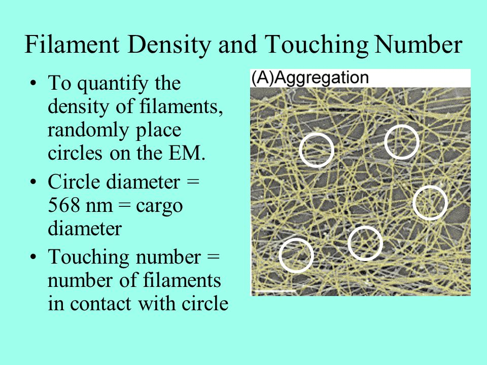Filament Density and Touching Number To quantify the density of filaments, randomly place circles on the EM. Circle diameter = 568 nm = cargo diameter