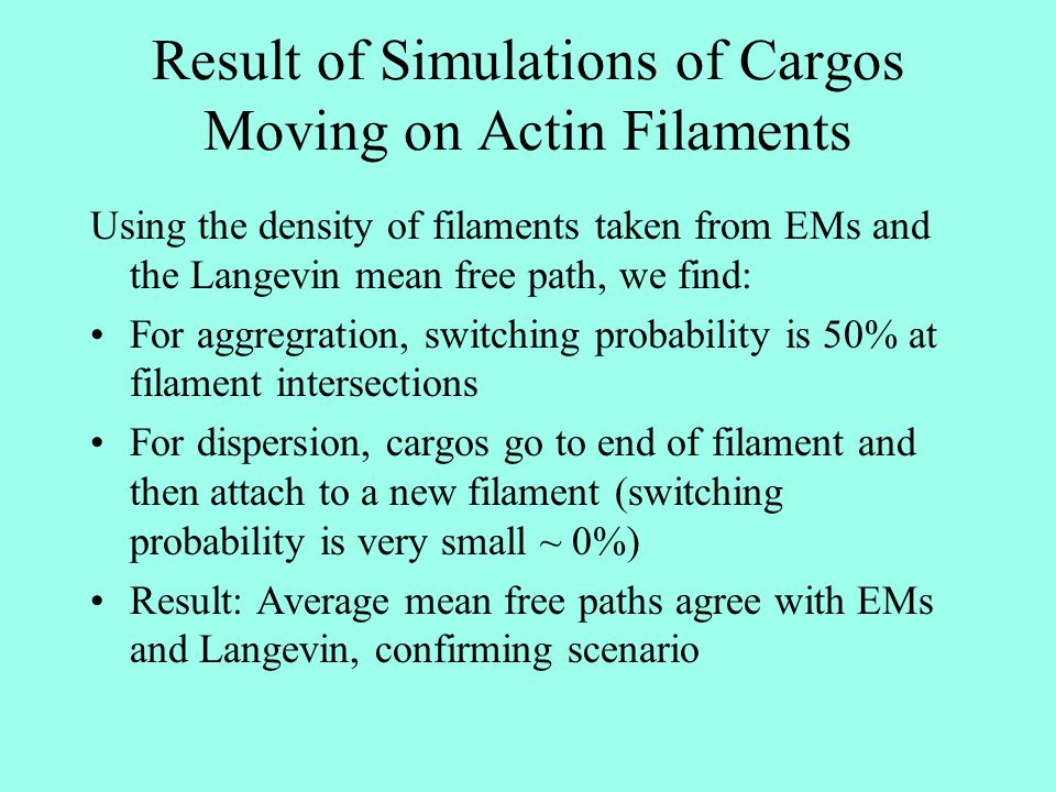 Result of Simulations of Cargos Moving on Actin Filaments Using the density of filaments taken from EMs and the Langevin mean free path, we find: For