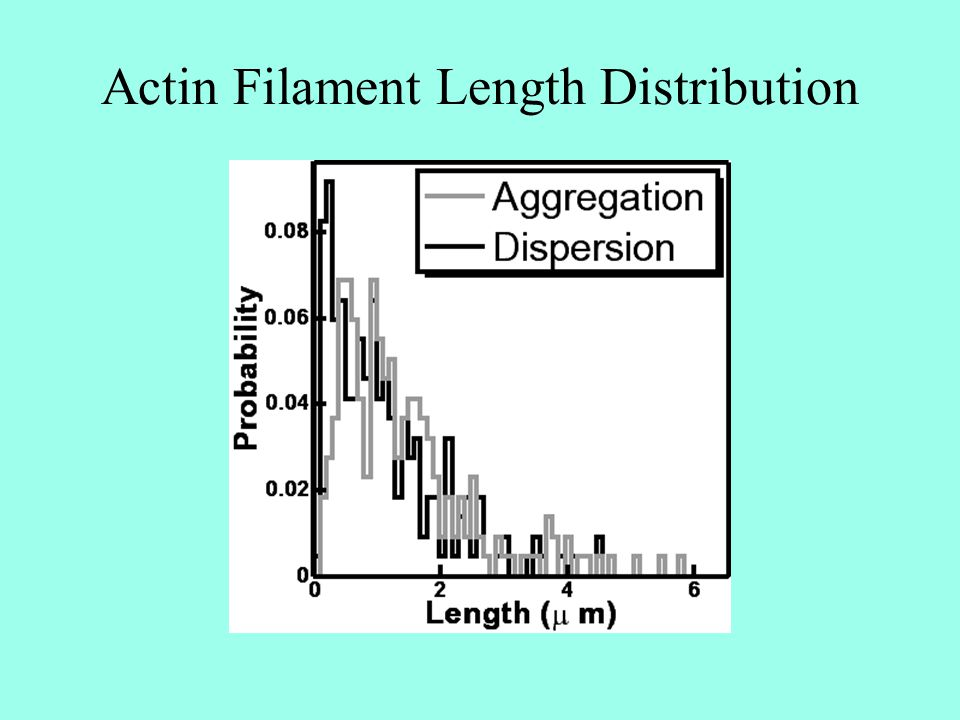Actin Filament Length Distribution