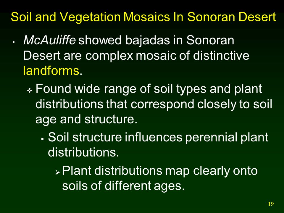 19 Soil and Vegetation Mosaics In Sonoran Desert McAuliffe showed bajadas in Sonoran Desert are complex mosaic of distinctive landforms.  Found wide