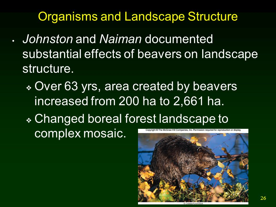 26 Organisms and Landscape Structure Johnston and Naiman documented substantial effects of beavers on landscape structure.  Over 63 yrs, area created
