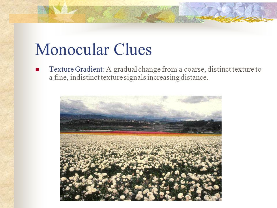 Monocular Clues Texture Gradient: A gradual change from a coarse, distinct texture to a fine, indistinct texture signals increasing distance.