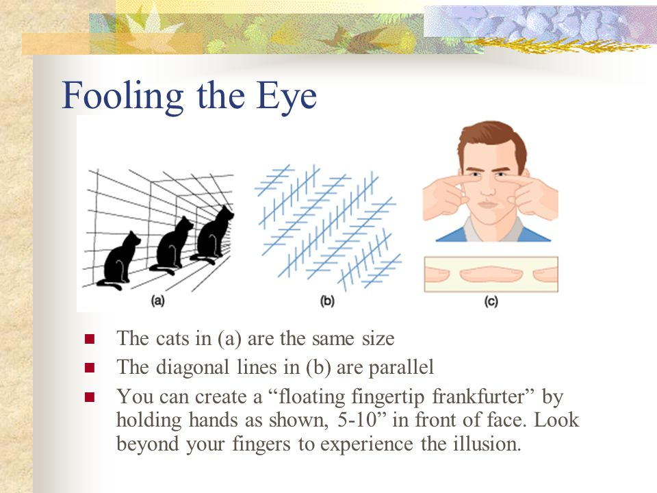 """Fooling the Eye The cats in (a) are the same size The diagonal lines in (b) are parallel You can create a """"floating fingertip frankfurter"""" by holding"""