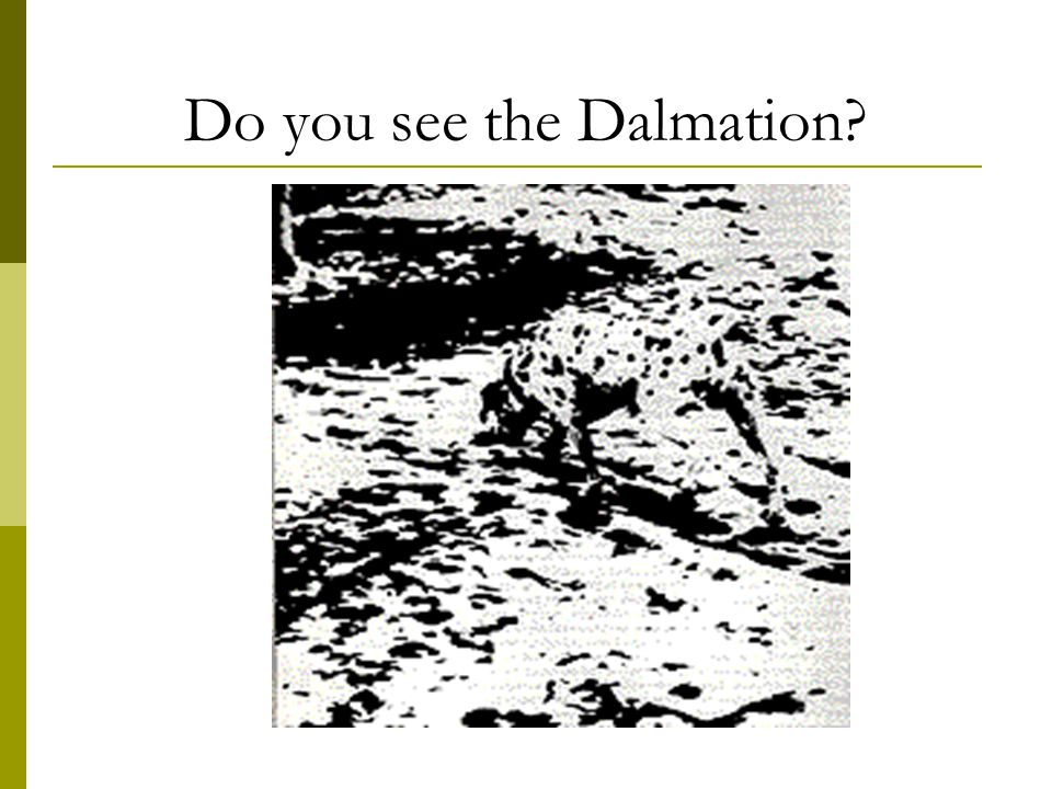 Do you see the Dalmation?