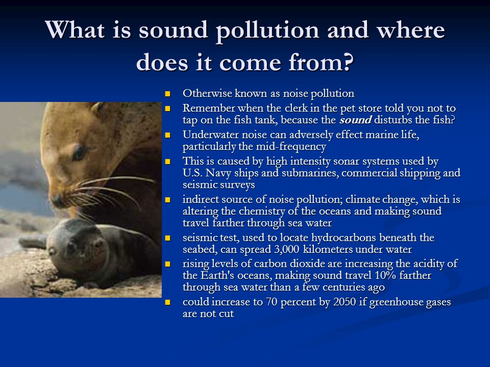 What is sound pollution and where does it come from? Otherwise known as noise pollution Otherwise known as noise pollution Remember when the clerk in