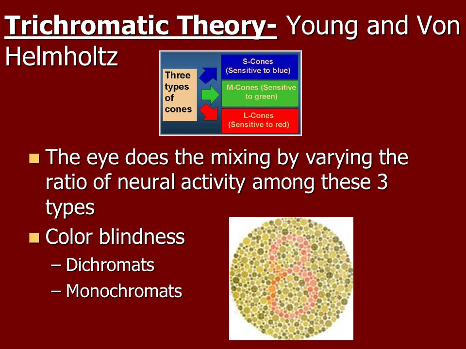 Trichromatic Theory- Young and Von Helmholtz The eye does the mixing by varying the ratio of neural activity among these 3 types The eye does the mixing by varying the ratio of neural activity among these 3 types Color blindness Color blindness –Dichromats –Monochromats