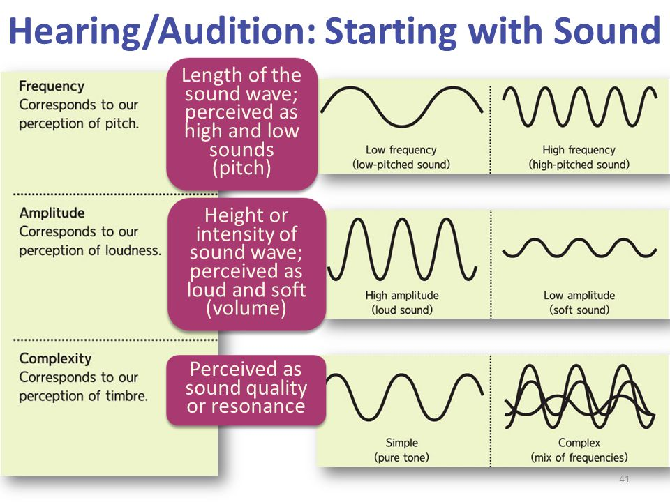 Hearing/Audition: Starting with Sound Height or intensity of sound wave; perceived as loud and soft (volume) Perceived as sound quality or resonance L