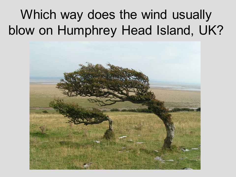 Which way does the wind usually blow on Humphrey Head Island, UK?