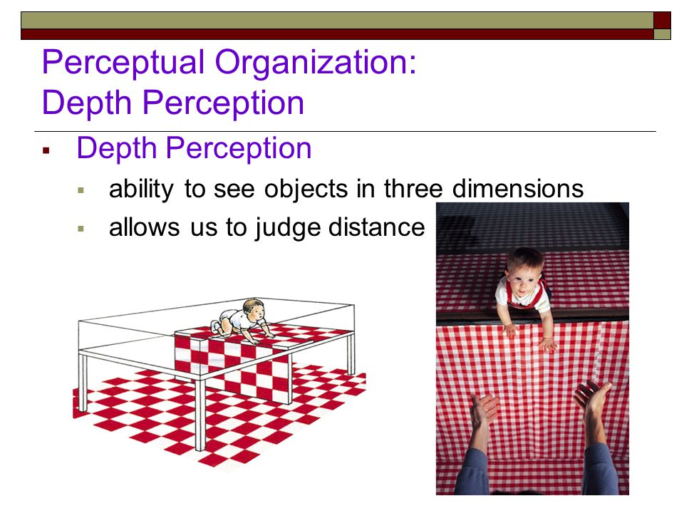 Perceptual Organization: Depth Perception  Depth Perception  ability to see objects in three dimensions  allows us to judge distance