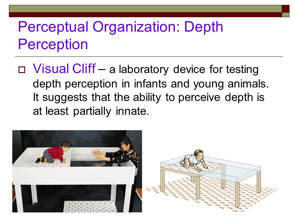 Perceptual Organization: Depth Perception  Visual Cliff – a laboratory device for testing depth perception in infants and young animals.