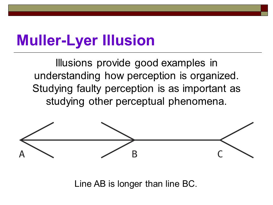 Muller-Lyer Illusion Illusions provide good examples in understanding how perception is organized.
