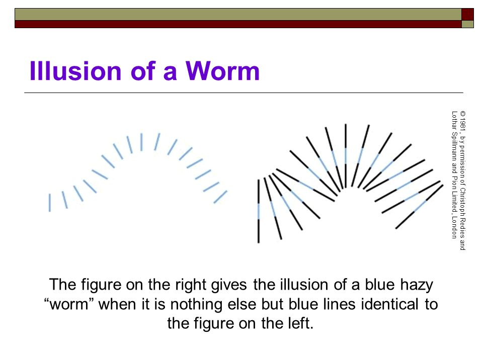 Illusion of a Worm The figure on the right gives the illusion of a blue hazy worm when it is nothing else but blue lines identical to the figure on the left.