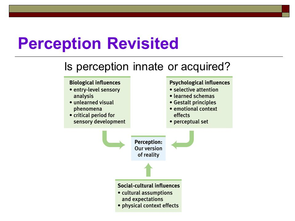 Perception Revisited Is perception innate or acquired