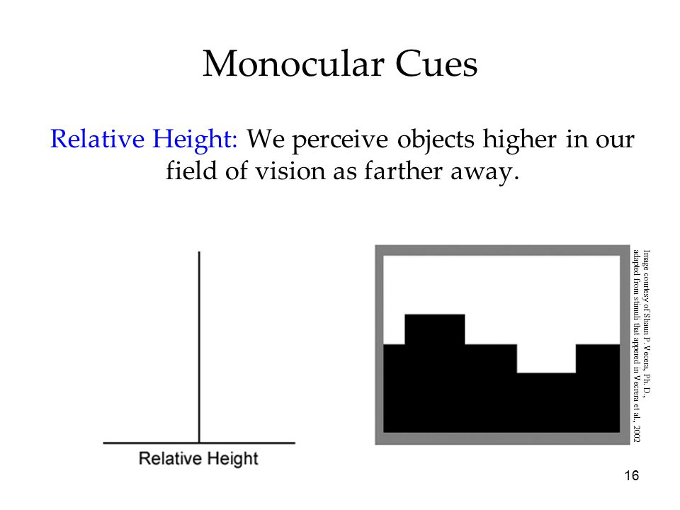 16 Monocular Cues Relative Height: We perceive objects higher in our field of vision as farther away. Image courtesy of Shaun P. Vecera, Ph. D., adapt