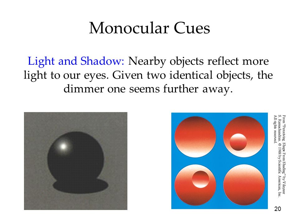 20 Monocular Cues Light and Shadow: Nearby objects reflect more light to our eyes. Given two identical objects, the dimmer one seems further away. Fro