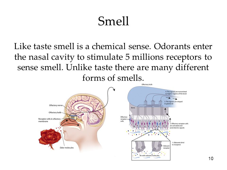 10 Smell Like taste smell is a chemical sense. Odorants enter the nasal cavity to stimulate 5 millions receptors to sense smell. Unlike taste there ar