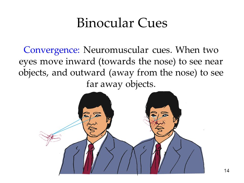14 Binocular Cues Convergence: Neuromuscular cues. When two eyes move inward (towards the nose) to see near objects, and outward (away from the nose)