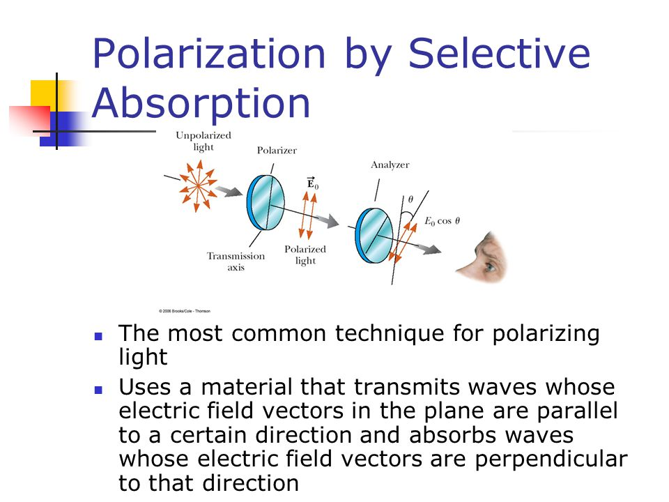 Polarization by Selective Absorption The most common technique for polarizing light Uses a material that transmits waves whose electric field vectors