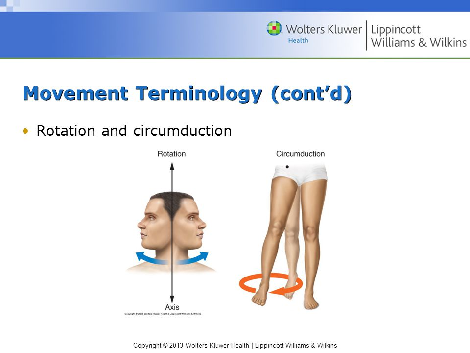 Copyright © 2013 Wolters Kluwer Health | Lippincott Williams & Wilkins Movement Terminology (cont'd) Rotation and circumduction