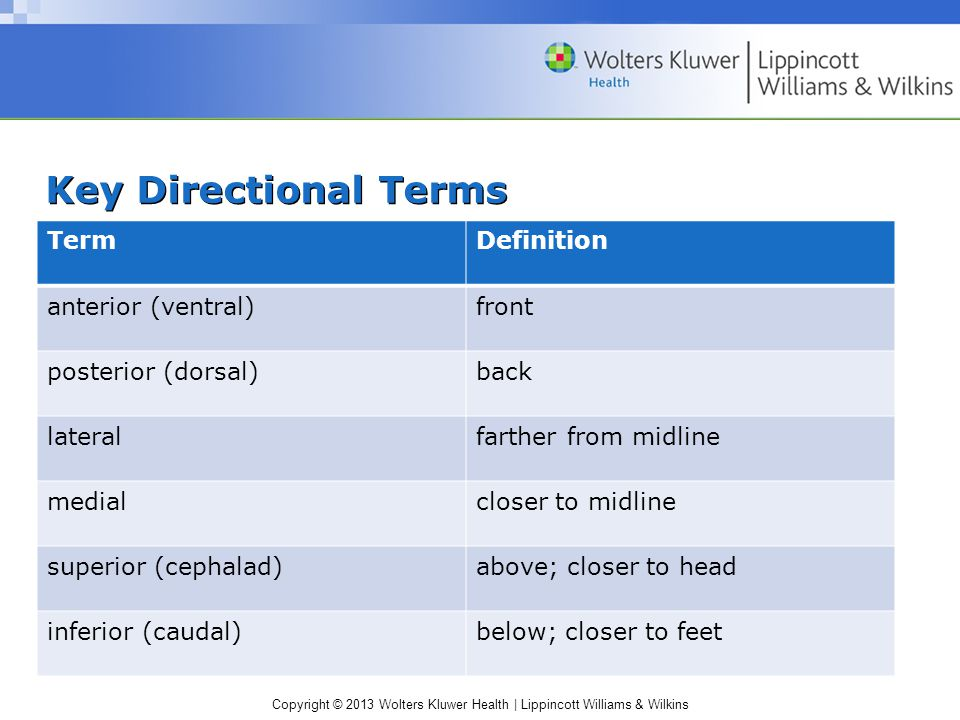 Copyright © 2013 Wolters Kluwer Health | Lippincott Williams & Wilkins Key Directional Terms TermDefinition anterior (ventral)front posterior (dorsal)