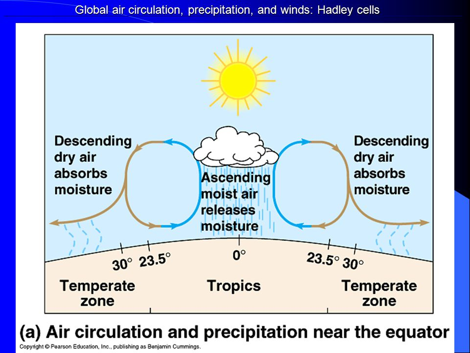 Global air circulation, precipitation, and winds: Hadley cells