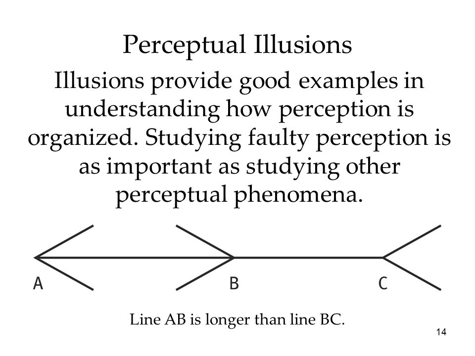 14 Perceptual Illusions Illusions provide good examples in understanding how perception is organized. Studying faulty perception is as important as st