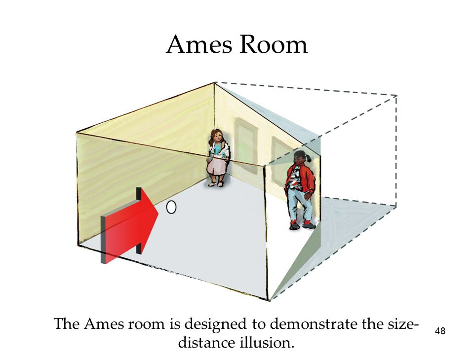 48 Ames Room The Ames room is designed to demonstrate the size- distance illusion.