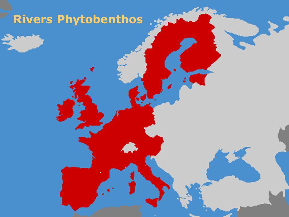 Rivers Phytobenthos