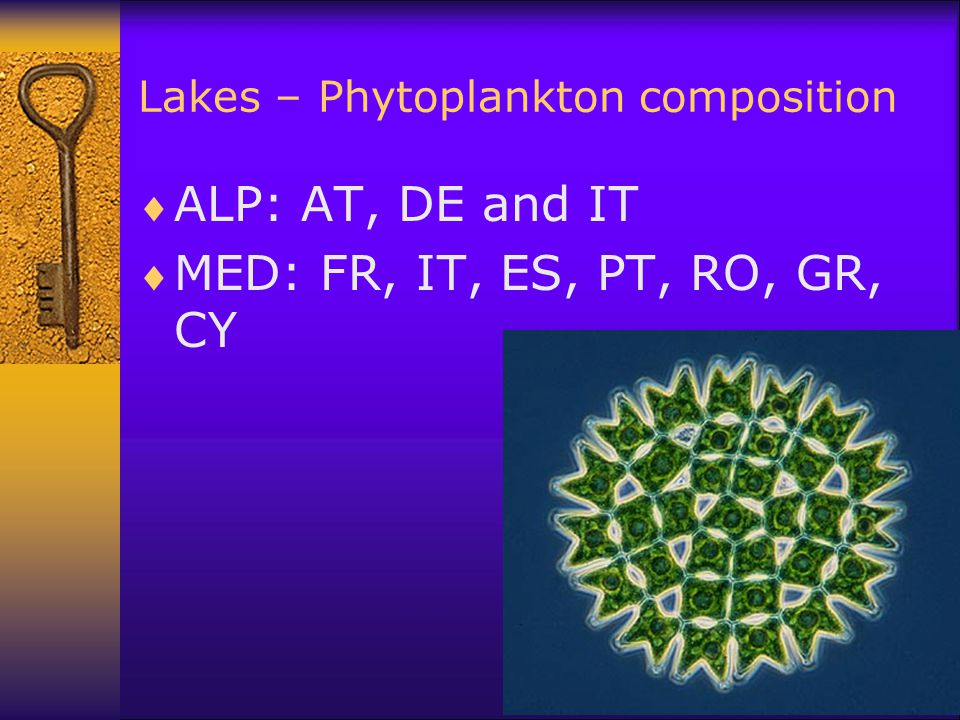 Lakes – Phytoplankton composition  ALP: AT, DE and IT  MED: FR, IT, ES, PT, RO, GR, CY
