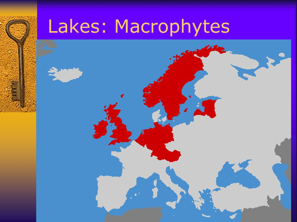 Lakes: Macrophytes