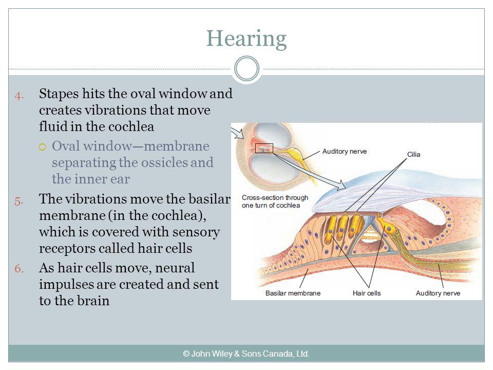 Hearing 4.
