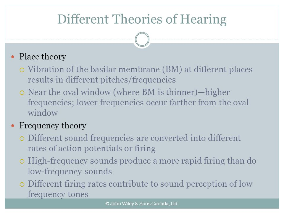 Different Theories of Hearing Place theory  Vibration of the basilar membrane (BM) at different places results in different pitches/frequencies  Near the oval window (where BM is thinner)—higher frequencies; lower frequencies occur farther from the oval window Frequency theory  Different sound frequencies are converted into different rates of action potentials or firing  High-frequency sounds produce a more rapid firing than do low-frequency sounds  Different firing rates contribute to sound perception of low frequency tones © John Wiley & Sons Canada, Ltd.