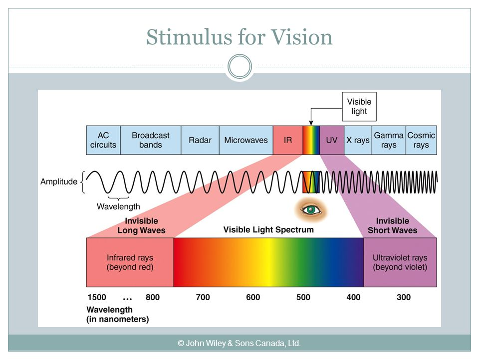Stimulus for Vision © John Wiley & Sons Canada, Ltd.