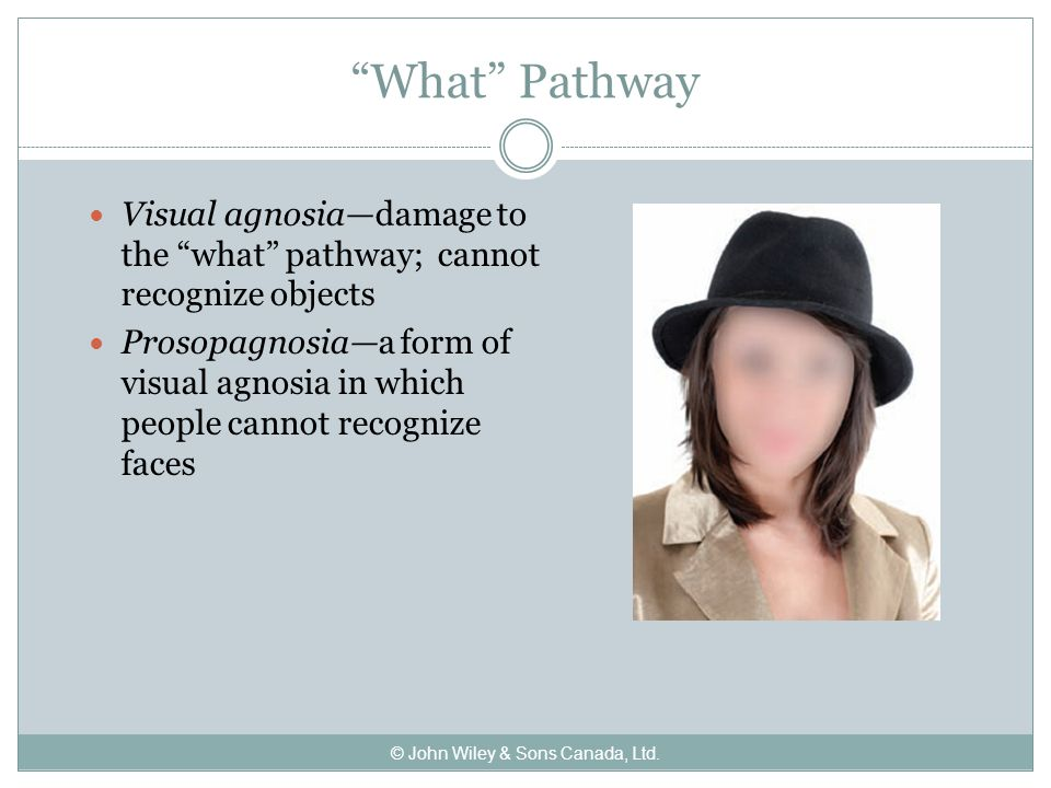 What Pathway Visual agnosia—damage to the what pathway; cannot recognize objects Prosopagnosia—a form of visual agnosia in which people cannot recognize faces © John Wiley & Sons Canada, Ltd.