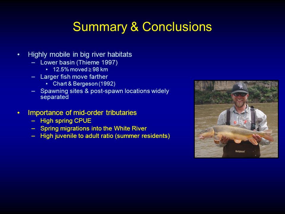 Summary & Conclusions Highly mobile in big river habitats –Lower basin (Thieme 1997) 12.5% moved ≥ 98 km –Larger fish move farther Chart & Bergeson (1992) –Spawning sites & post-spawn locations widely separated Importance of mid-order tributaries –High spring CPUE –Spring migrations into the White River –High juvenile to adult ratio (summer residents)