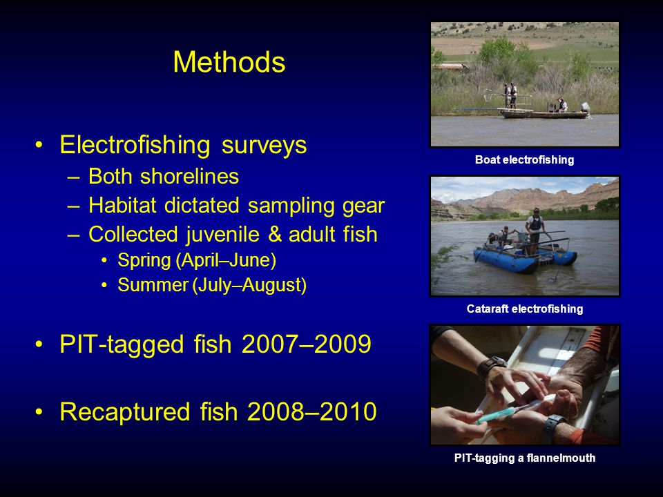 Methods Electrofishing surveys –Both shorelines –Habitat dictated sampling gear –Collected juvenile & adult fish Spring (April–June) Summer (July–August) PIT-tagged fish 2007–2009 Recaptured fish 2008–2010 Cataraft electrofishing Boat electrofishing PIT-tagging a flannelmouth