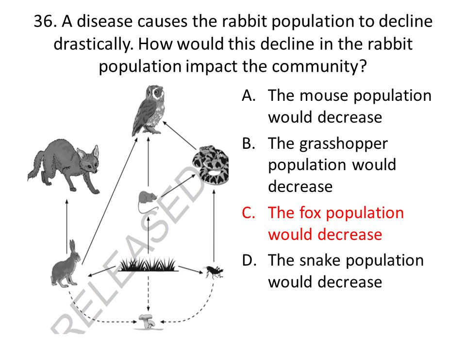 36.A disease causes the rabbit population to decline drastically.