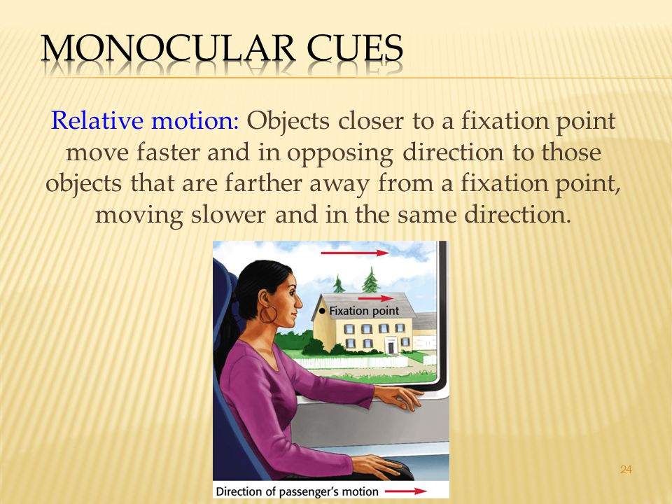 24 Relative motion: Objects closer to a fixation point move faster and in opposing direction to those objects that are farther away from a fixation po