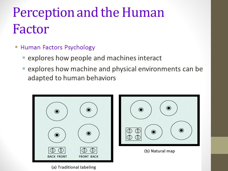 Perception and the Human Factor  Human Factors Psychology  explores how people and machines interact  explores how machine and physical environments can be adapted to human behaviors