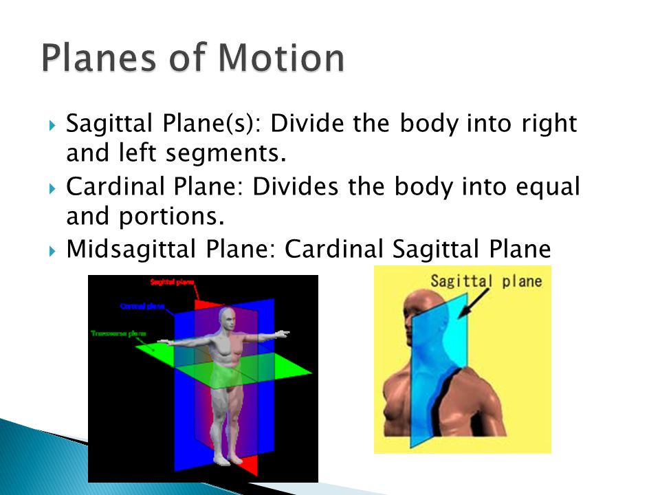  Sagittal Plane(s): Divide the body into right and left segments.