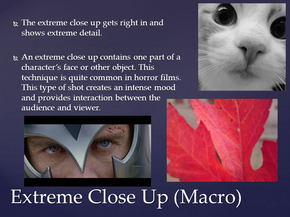  The extreme close up gets right in and shows extreme detail.