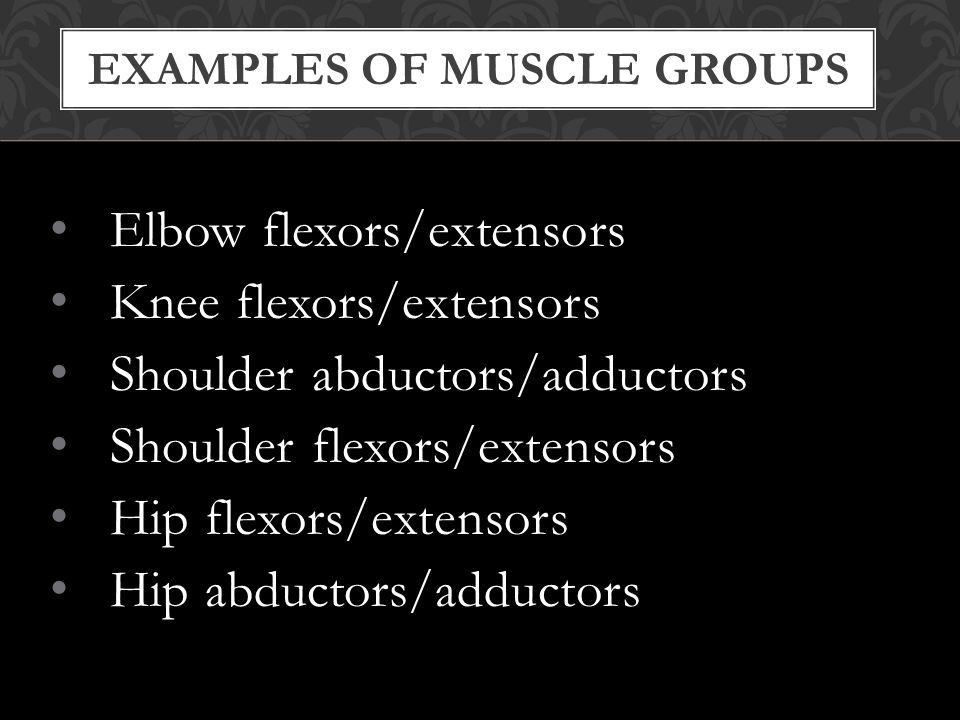 EXAMPLES OF MUSCLE GROUPS Elbow flexors/extensors Knee flexors/extensors Shoulder abductors/adductors Shoulder flexors/extensors Hip flexors/extensors Hip abductors/adductors