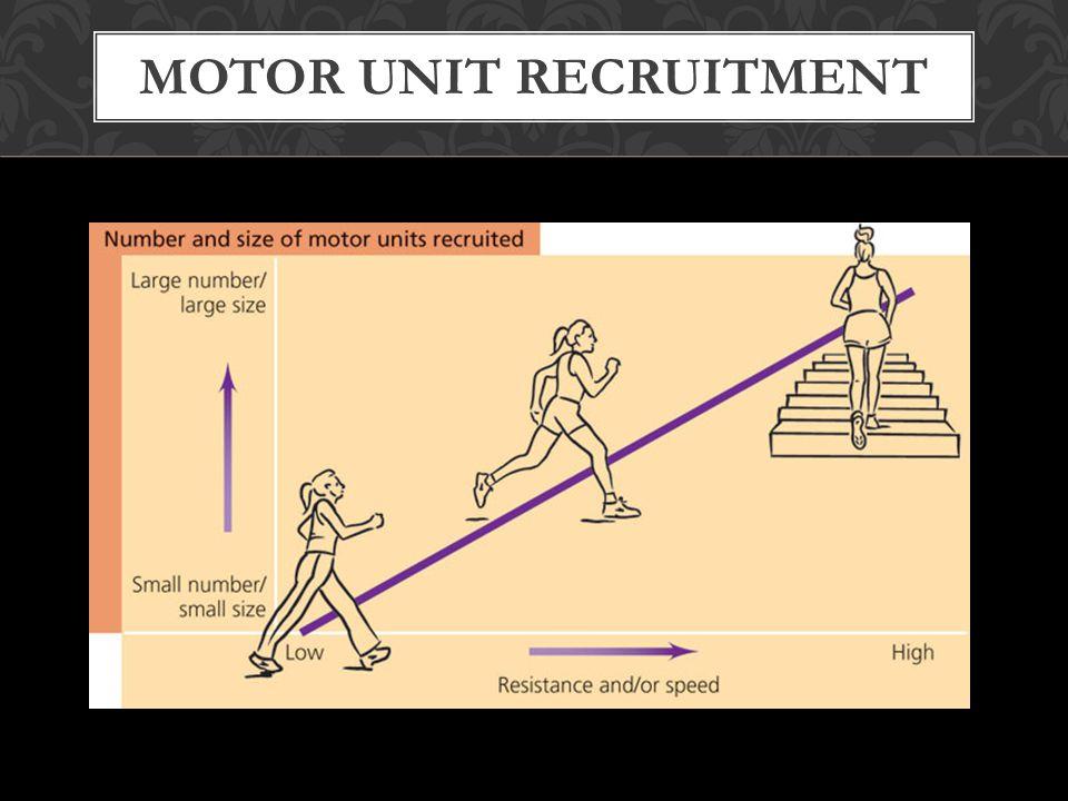 MOTOR UNIT RECRUITMENT