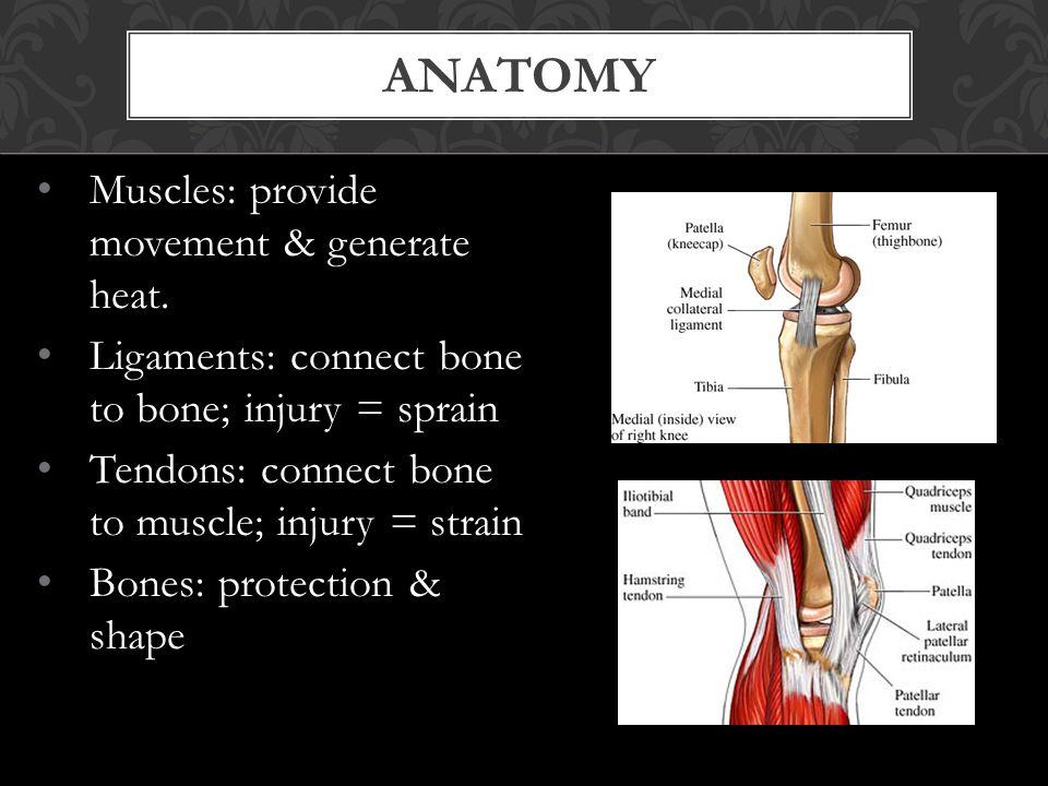 ANATOMY Muscles: provide movement & generate heat.