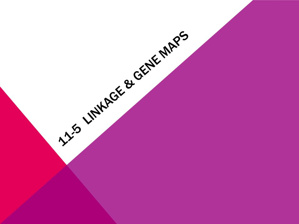 11-5 LINKAGE & GENE MAPS