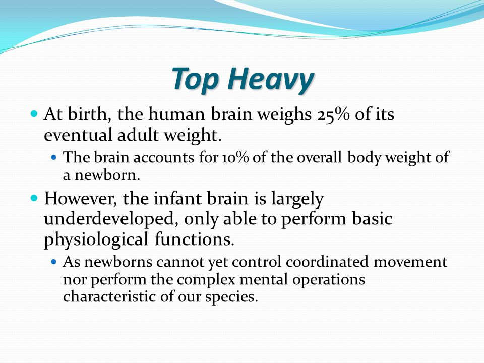 Top Heavy At birth, the human brain weighs 25% of its eventual adult weight.